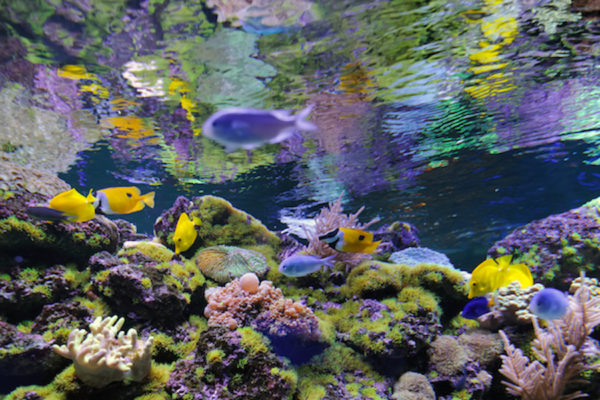 Steps to Protect & Rehabilitate Your Coral Reefs