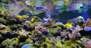 steps to protect + rehabilitate your coral reefs