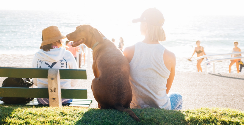Why Luxury Resorts Should Rethink Pet Policies